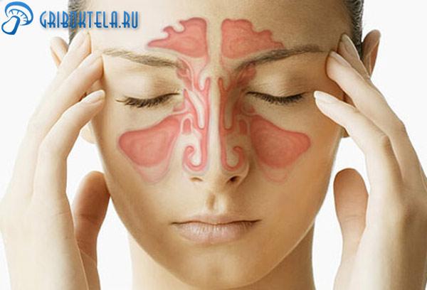 Носовая система человека
